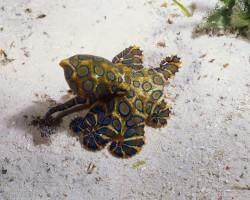 Sipadan Island Diving