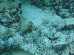 Pom Pom Island Diving