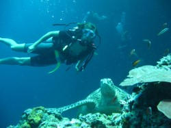 Sipadan Island Diving