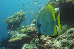 Kapalai Island Diving