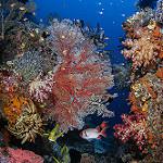 Scuba Diving in Blue Magic