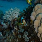 Scuba Diving in Hamata