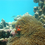 Scuba Diving in Cairns