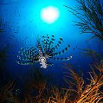 Scuba Diving in Coron, Palawan