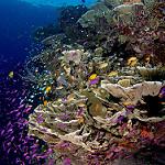 Scuba Diving in Bohol Island
