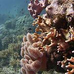 Scuba Diving in Port Douglas