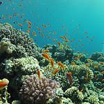 Scuba Diving in Dahab