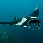 Scuba Diving in Hin Muang