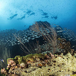 Scuba Diving at Chumphon Pinnacle