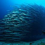 Scuba Diving in Derawan