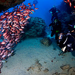 Scuba Diving in Cape Verde