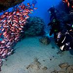 Scuba Diving in Cape Verde