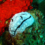 Scuba Diving in Pulau Tiga