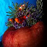 Scuba Diving in Davao