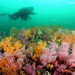 Scuba Diving in Hong Kong