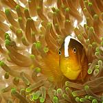 Scuba Diving in Miri