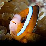 Scuba Diving in Siamil