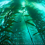 Scuba Diving in Northn California