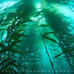 Scuba Diving in Northn California