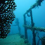 Scuba Diving in Utila