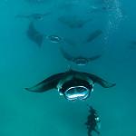 Baa Atoll Scuba Diving