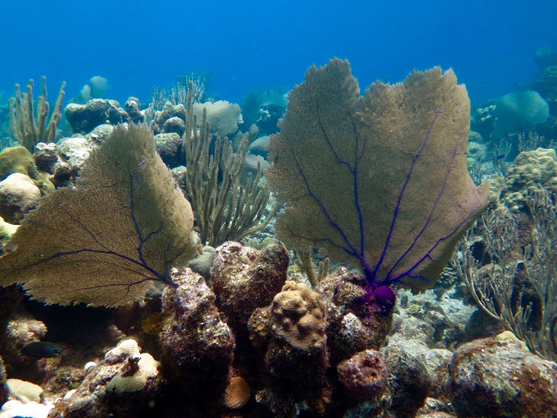 Colorful Coral tree at Punta Perdiz