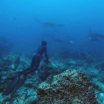 Freediving Blog