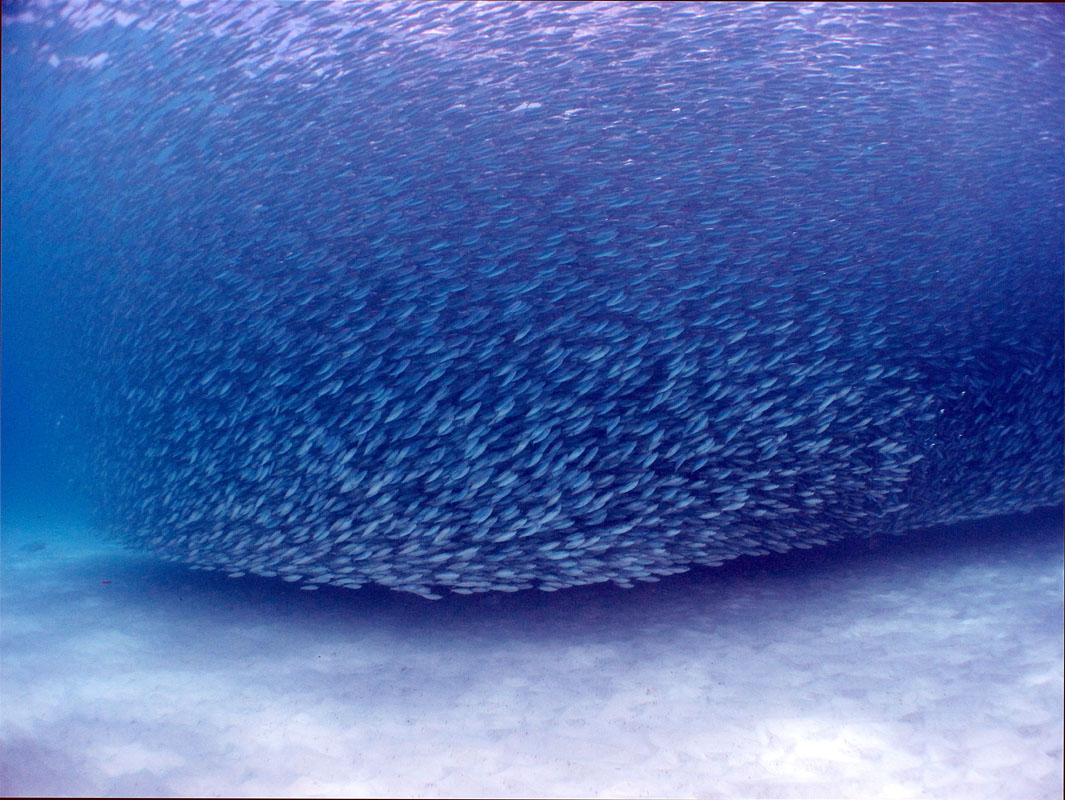 School of Fish, Costa Rica