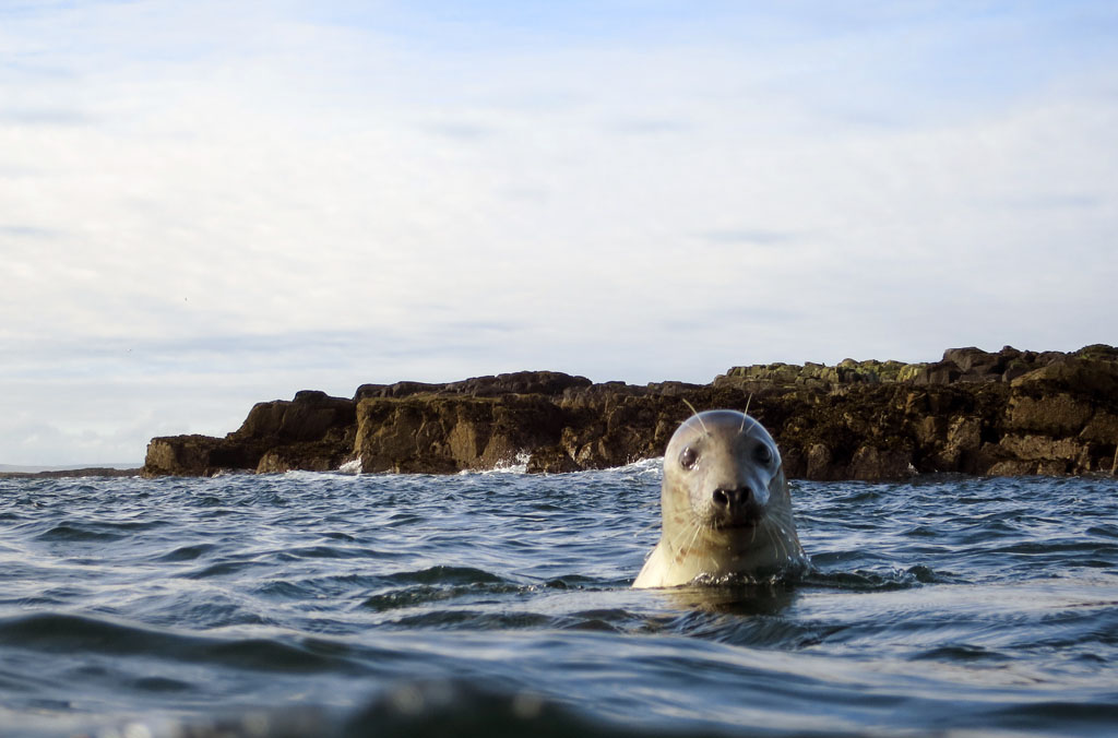 Scuba Diving with Seals at Farne Islands, UK