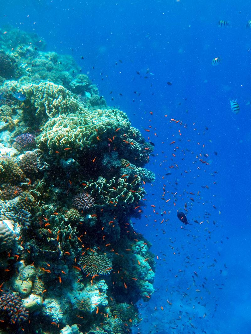 Sataya coral reef