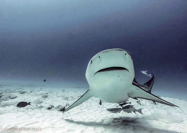 SHARK POINT, BULL SHARK DIVE, Scuba Diving, Buceo