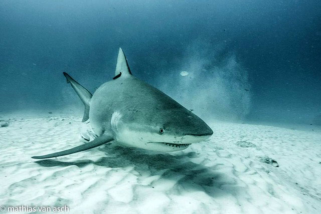 Bull Shark Point, Playa Del Carmen, Mexico