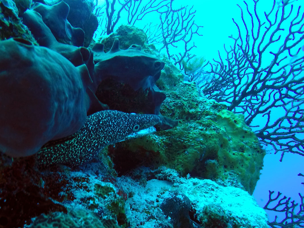 Paso del Cedral wall eel